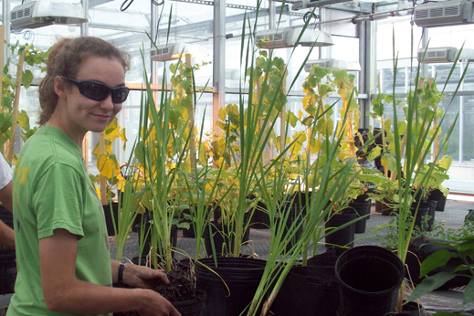 Photo of team leader Isabel Enerson tending to plants in the greenhouse